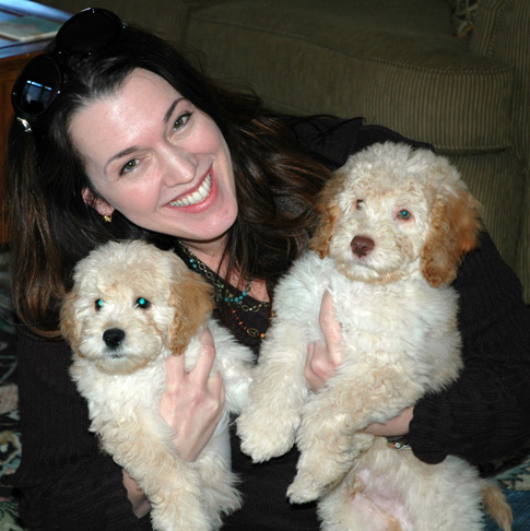 New labradoodle Owners
